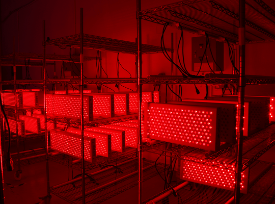red light therapy test.png